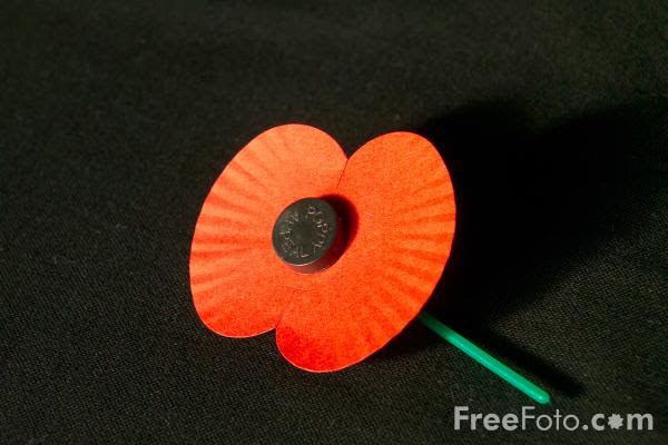 Picture of Remembrance day poppy - Free Pictures - FreeFoto.com
