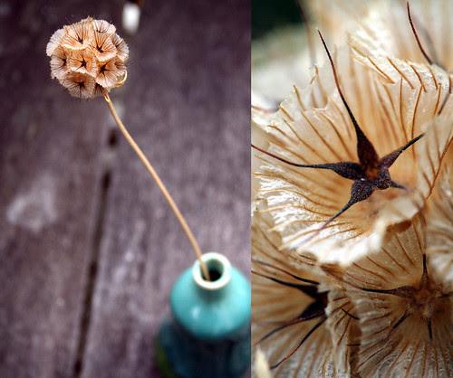 little star-studded seedpod