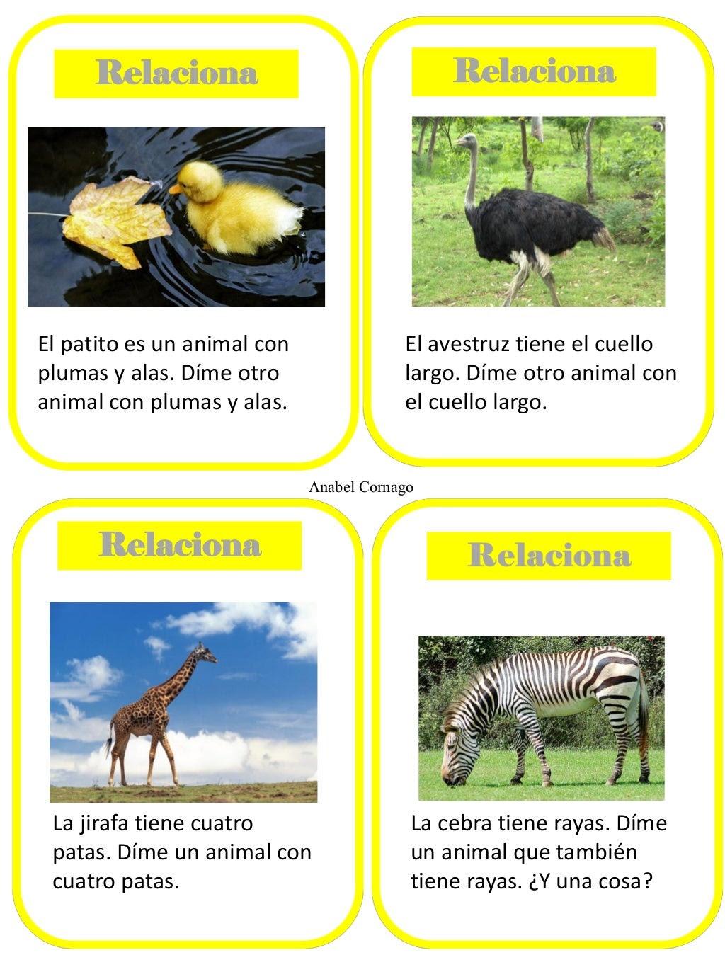 Relaciona  Relaciona  El patito es un animal con plumas y alas. Díme otro animal con plumas y alas.  El avestruz tiene el ...