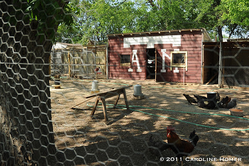A&M-themed chicken coop at Springdale Farm