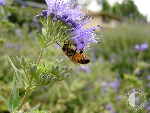 hanging bees2