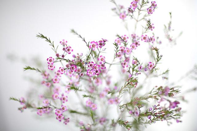 purpleflowers2
