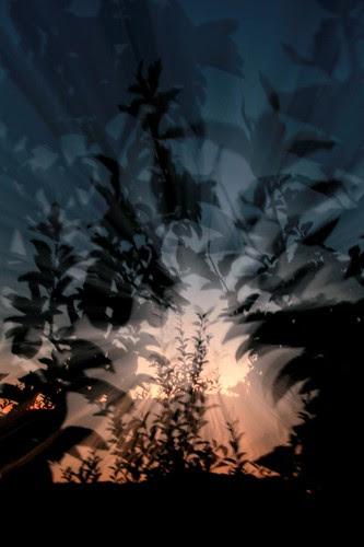 orchard-jungle
