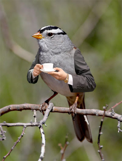 Image result for birds with arms