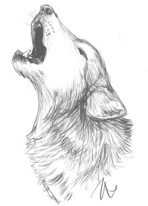 wolf drawing idea   wolf sketch sketches art