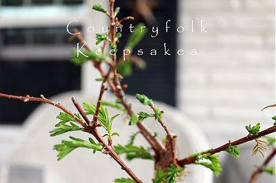 photo spring1_zps9c56716a.jpg