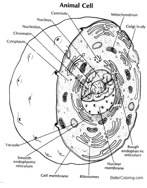 animal cell coloring pages  printable coloring pages
