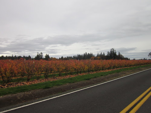 Fall berry bushes on Leisy Rd