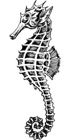 Dibujos De Caballitos De Mar Para Colorear Caballitodemarpedia