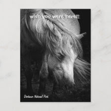 Fine Art Pony Head and Mane postcard postcard