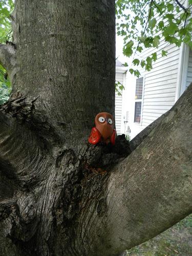 Palito maple tree