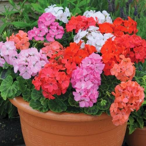 Cinco Flores De Verano Para Macetas
