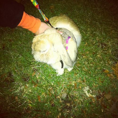 Bunny on a leash!