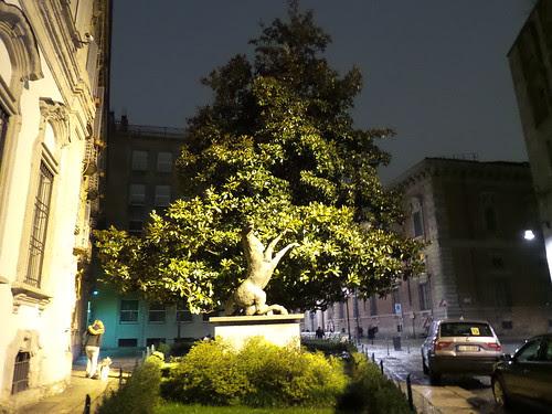 Se si guarda bene il tronco dell'albero by Ylbert Durishti