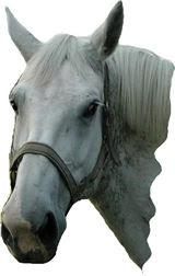 Horse: Nobody