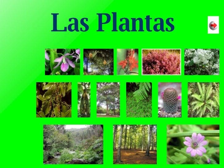Resultado de imagen de las plantas