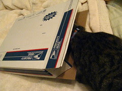 Maggie helping pack the box