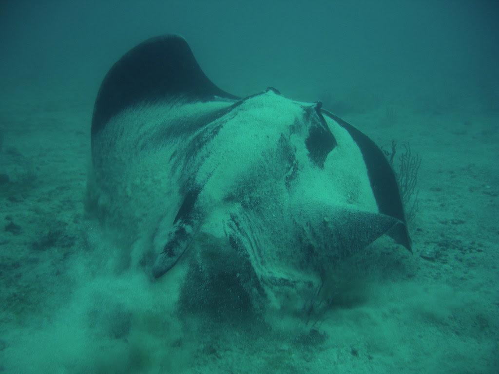 Diving Musandam - 6
