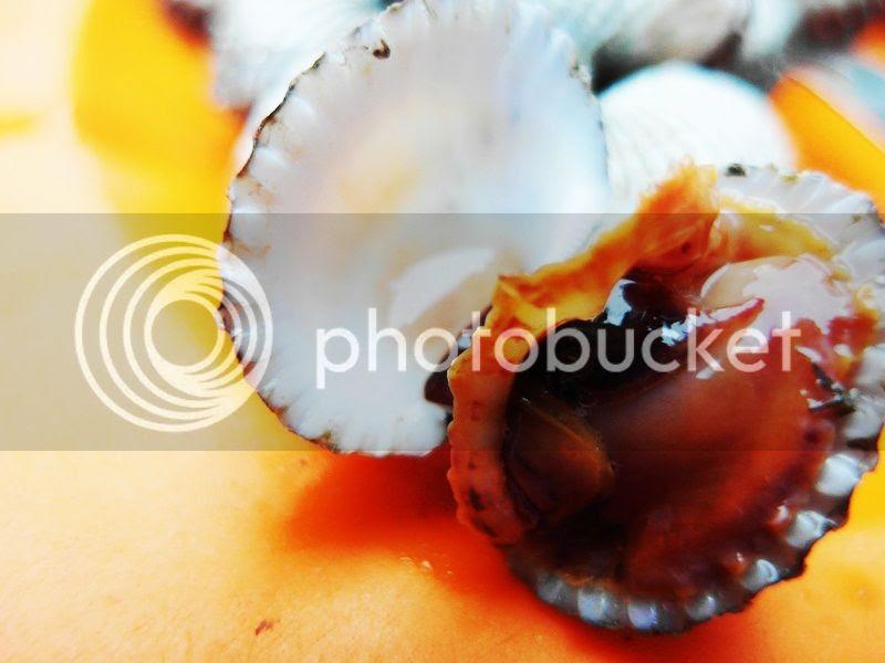 photo 09_zps392436c1.jpg