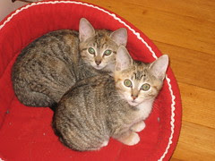 Kittens in Their Bed