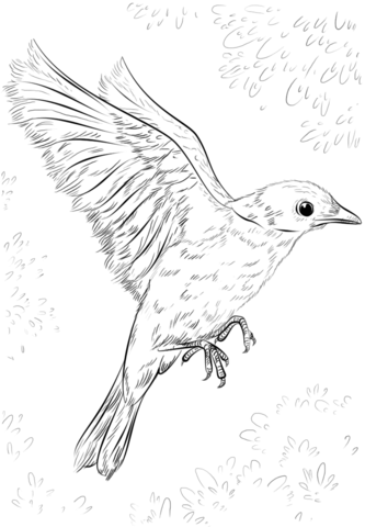 45 Coloring Pages Big Bird Download Free Images