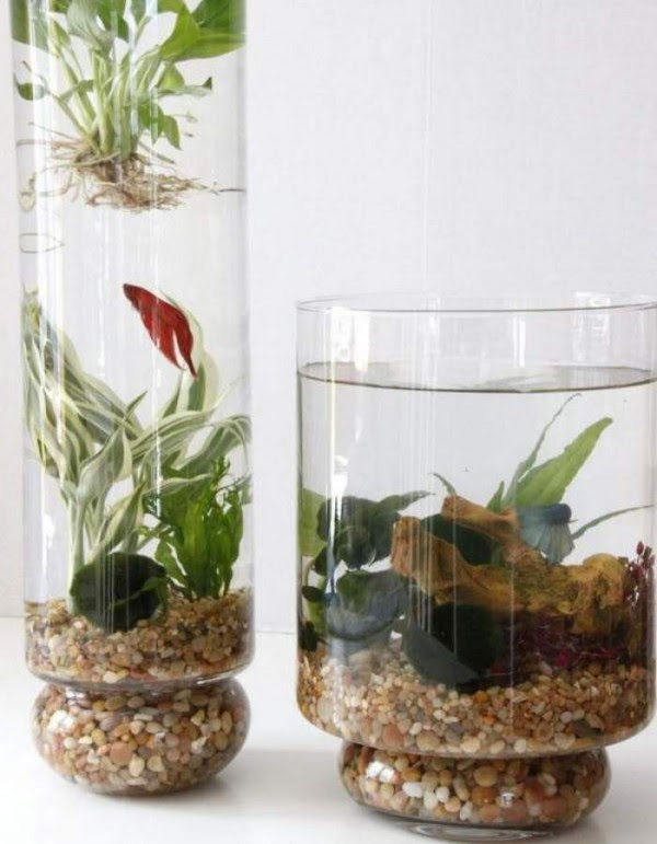 jardines-acuaticos-de-interior-06