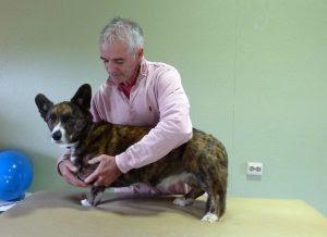 massagem para cães