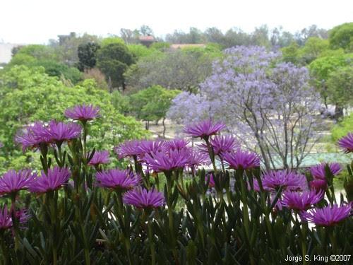 Flores y Plaza