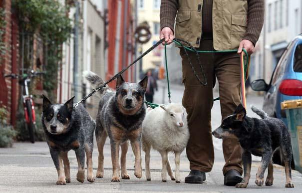 Οι 50 καλύτερες φωτογραφίες ζώων του 2012 (41)