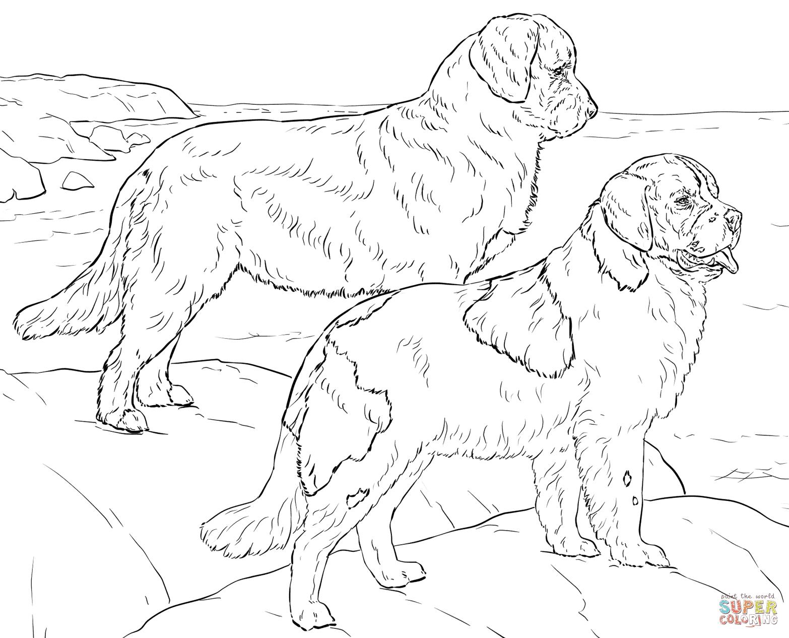 charmante kleurplaat berner sennen hond krijg duizenden