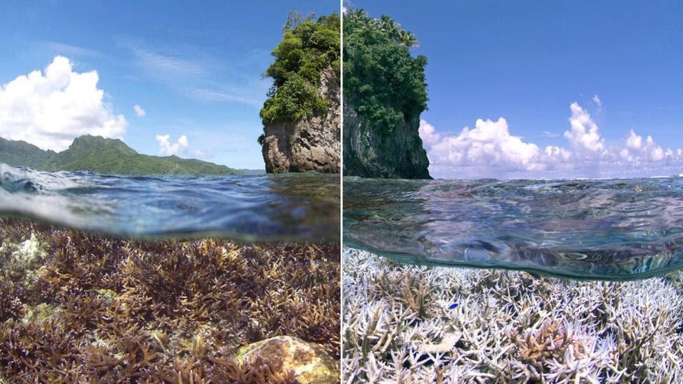 La Gran Barrera de Coral se muere de calor
