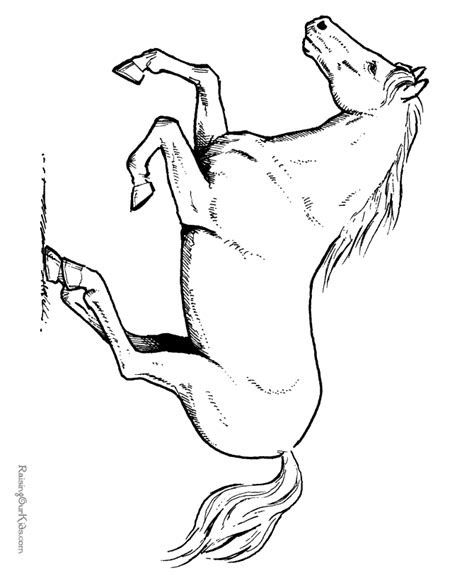 palomino horse coloring pages   print