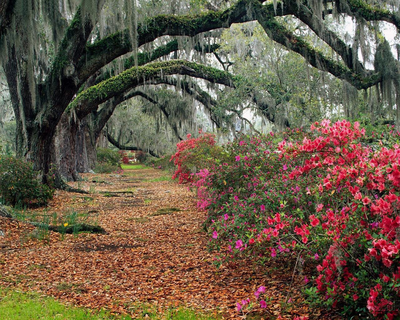 Incredible Nature Photography