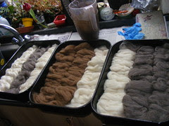 Shetland ready for dyeing