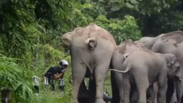 El motoquero se topó con la manada de elefantes que lo rodeó al instante.