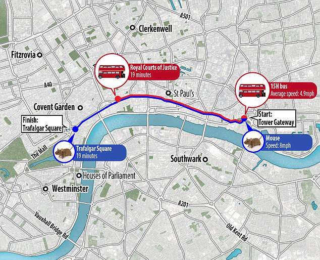 It takes about 30 minutes for the bus to complete the route from Tower Hill to Trafalgar Square - which could be completed in just under 20 minutes by a continually sprinting mouse