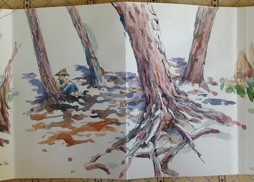Dibujando bajo los pinos