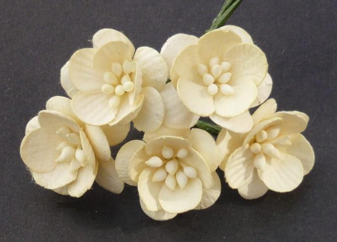 http://scrapkowo.pl/shop,kwiaty-wisni-ecru-5szt,4824.html