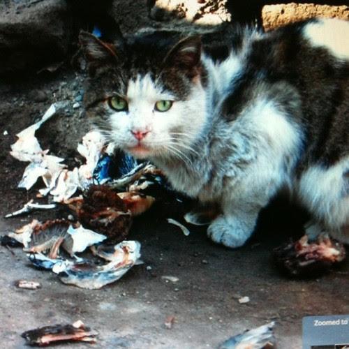 Street cat Tbilisi