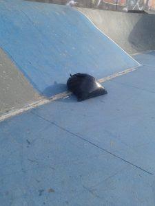 pista de skate3