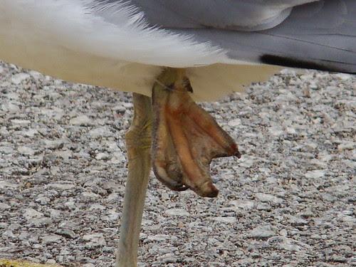 foot close up