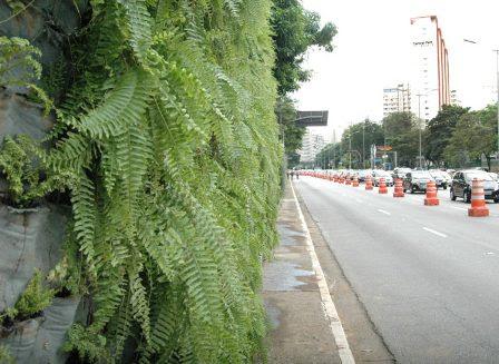 Verdejando corredor verde 23 de maio