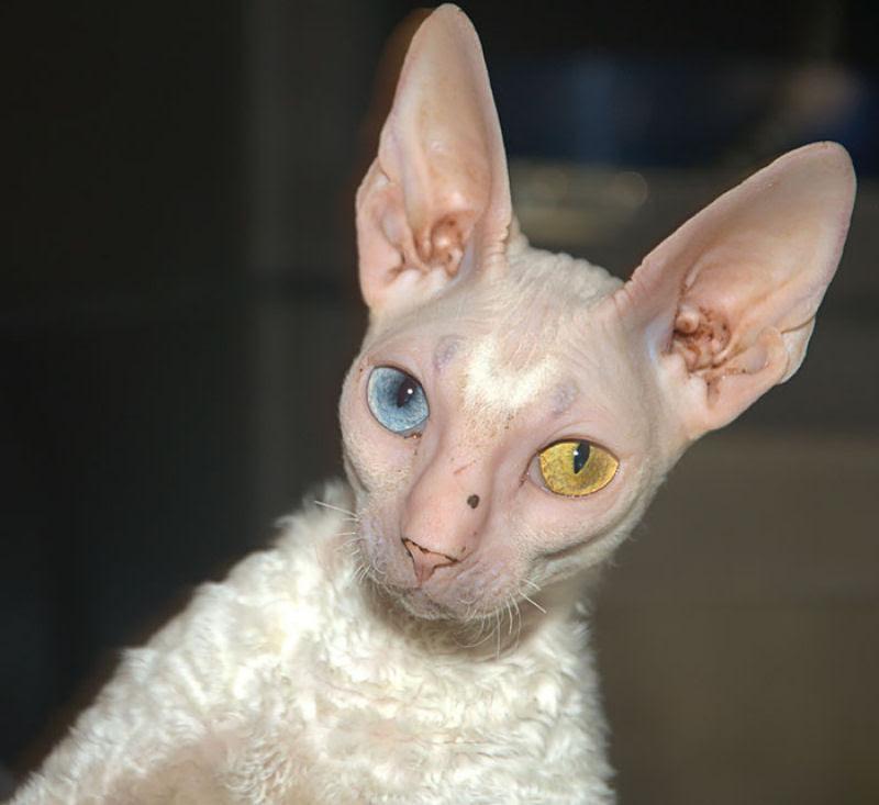 20 animais extraordinariamente belos com olhos ímpares 07