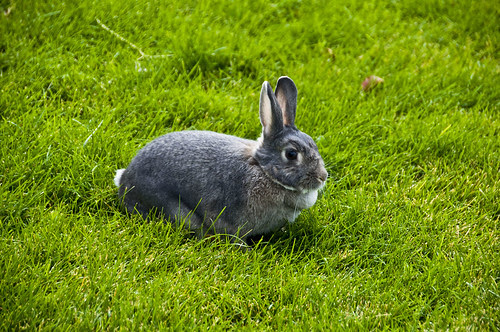Good Bye Bunny