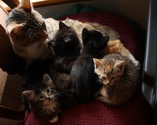 Maisy and Kittens