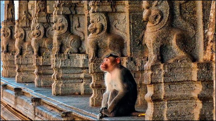 Хампи. В храме Вирупакши/3673959_14 (700x393, 119Kb)