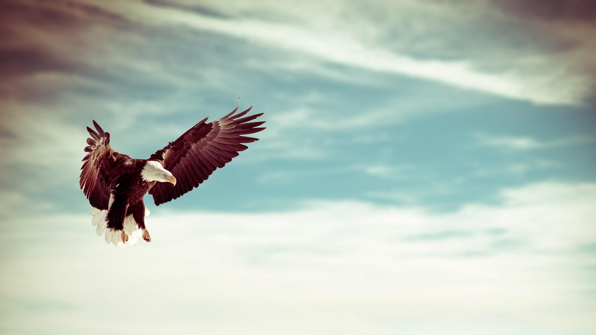 Flying Eagle [1920x1080]