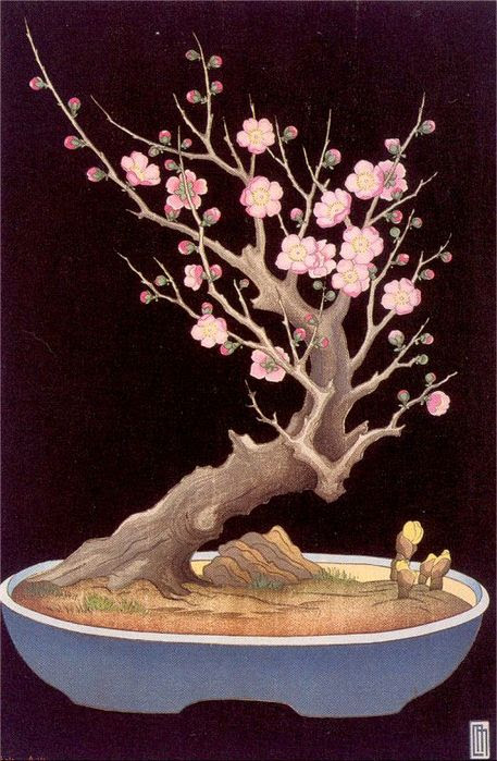 A Japanese Dwarf Plum Tree