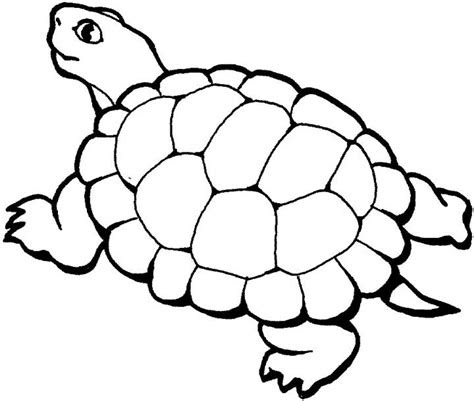 turtle coloring page  kids  printable picture