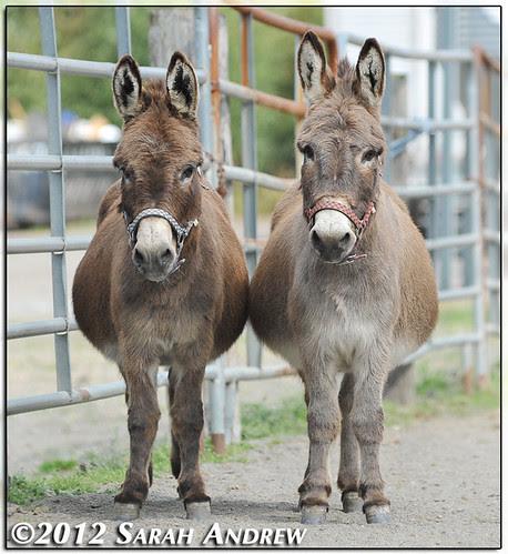 Festus and Eeyore